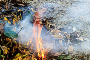 bonfire on dry leaf pile in the garden