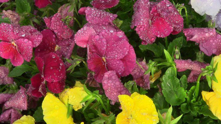 Ateliers municipaux : De l'eau de pluie pour nos plantes fleuries !