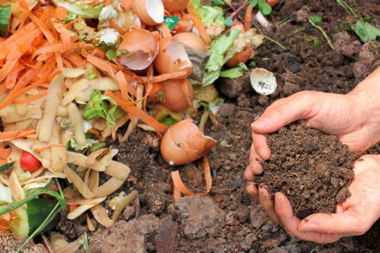 Distribution gratuite de compost le 24 sept