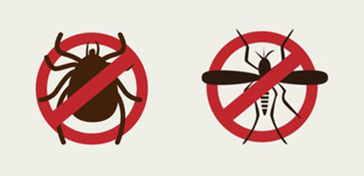 Cet été : attention aux tiques et moustiques !