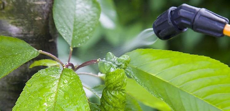 Les pesticides interdits dans les jardins depuis le 1er janvier 2019