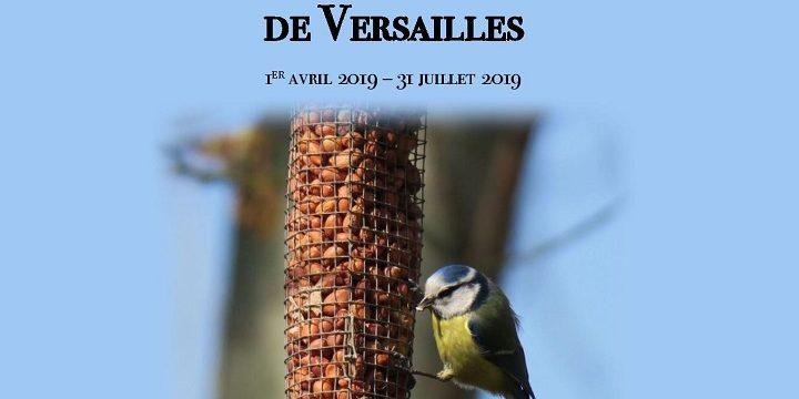 EXPOSITION «Les oiseaux de la Plaine de Versailles»