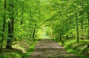 Réouverture des forêts, mode d'emploi