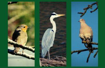 Exposition sur les oiseaux de la Plaine