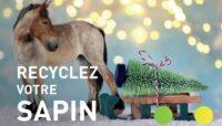GRANDE PREMIÈRE : COLLECTE DES SAPINS EN VOITURE À CHEVAL LES 9 ET 10 JANVIER !